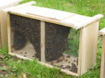 Packages and Nucs - Buzzs Bees